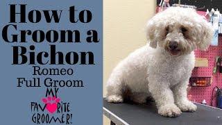 How to Groom a Bichon (Romeo)
