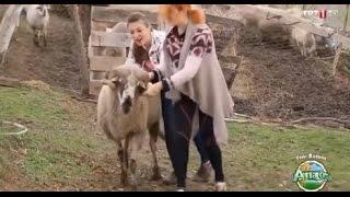 Ana Ocağı Koyun Tartma - Çok Komik