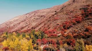 Осень в Аксайском ущелье съемки с дрона #Горы #Природа #Казахстана