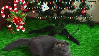 Funny cat Busia play with  christmas tree