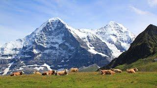 Summer in the Swiss alps. The Jungfrau region in Switzerland.