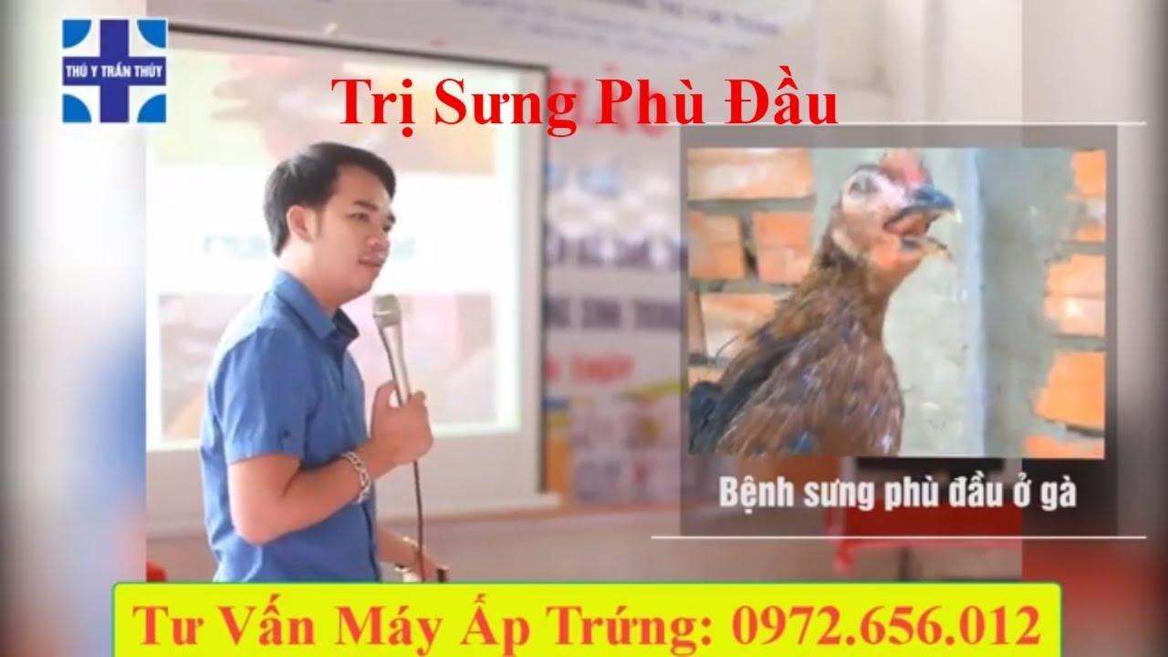 Bệnh sưng phù đầu trên gà – Triệu chứng, nguyên nhân và cách điều trị | Ánh Dương HCMC