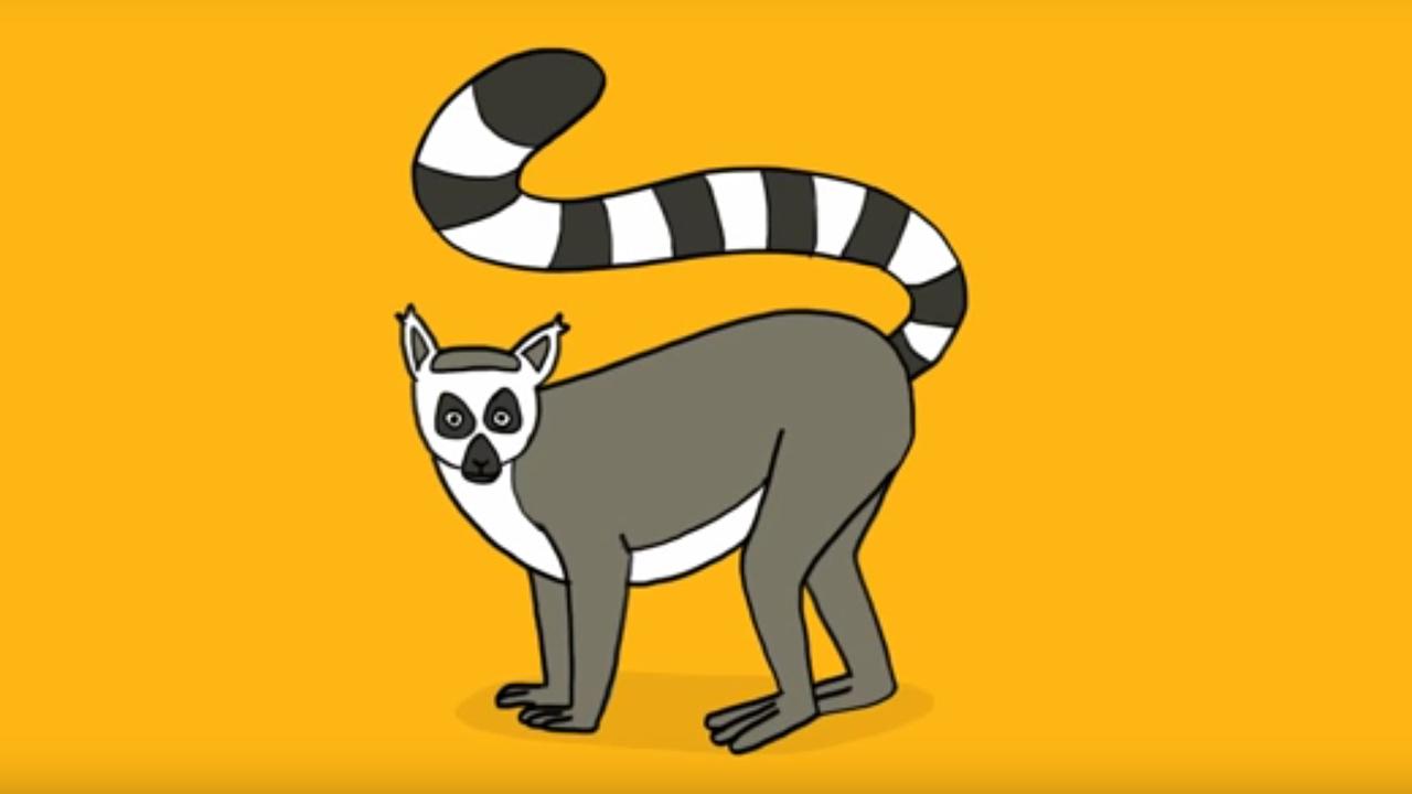 Apprendre dessiner l 39 animal maki de mayotte youtube - Animal a dessiner ...
