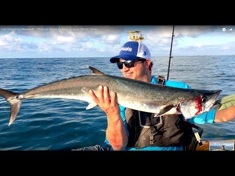 Spanish mackerel in texas