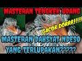Masteran Tengkek Undang Gacor Jernih   Mp3 - Mp4 Download