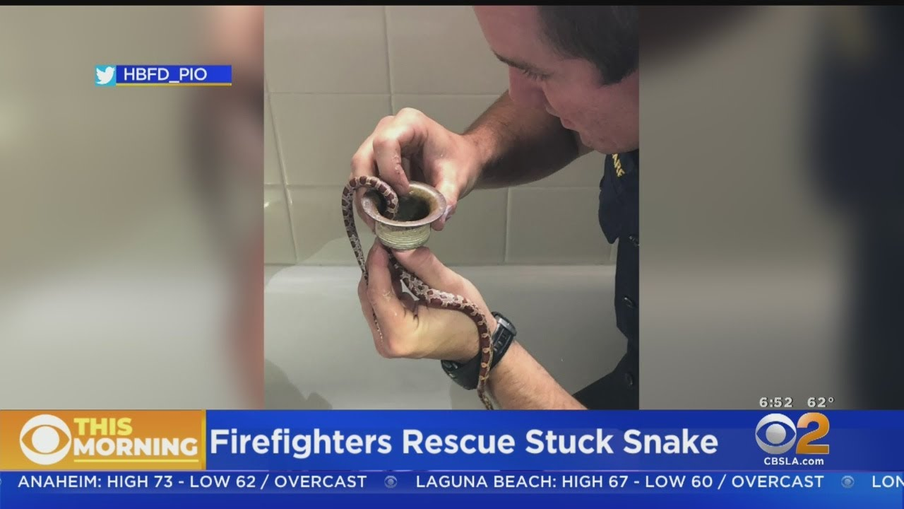 Firefighters In Huntington Beach Called To Rescue Snake Stuck In Drain
