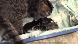 Котята родились 5 июня.