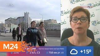 Смотреть видео Теплая погода ожидается в столичном регионе 23 апреля - Москва 24 онлайн