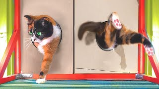 HOW CAT CAN GET THROUGH SMALL HOLE? :D