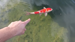 One hundred baby KOI ARMY JOINS THE RAWWFAM!!