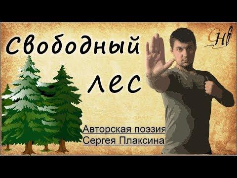 """Стихи - """"Свободный лес""""🌲🌳. Автор - Сергей Плаксин"""