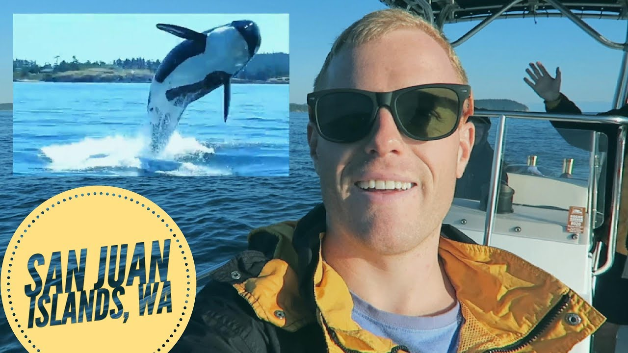 Huge pod of 20 Orca Whales, San Juan Islands, WA – Top things to do in Seattle, Whale Watching Tours