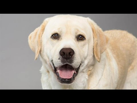 Dogs barking sounds angry | Funny Dog Barking Videos Compilation