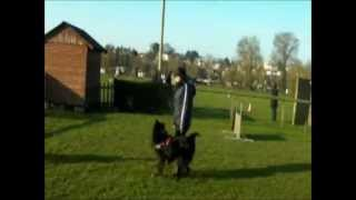 cours deducation canine obeissance chateau gontier 2012