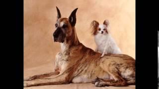 корм для собак натурал(, 2014-10-20T18:23:52.000Z)