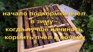 начало подкормки пчел в зиму - когда лучше начинать кормить пчел и почему
