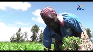 The frustration that maize farmers experienced in the Rift Valley h...