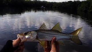 First Trip To Tampa/Cockroach Bay Kayak Fishing 8-4-15