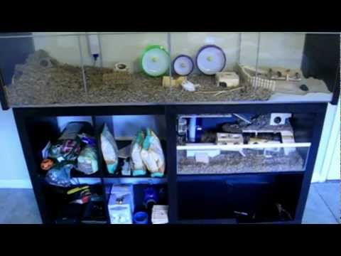 Ikea Detolf - The Single Best Hamster Purchase I've Ever Made - YouTube