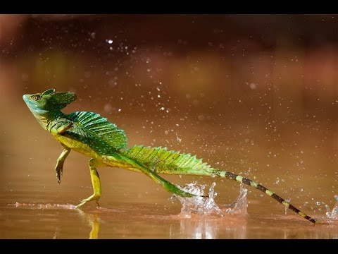 10 INCREDIBLE Animals & Their Abilities