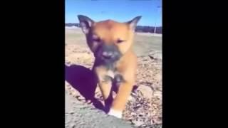 سعودي رحوم ينقذ كلب من حفرة وبعد أنقاذه يلاحقه ويتقرب أليه وكأنه يشكره - سبحان الله