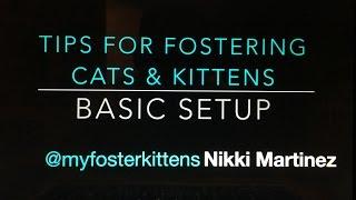 Setting Up a Cat/Kitten Foster Room