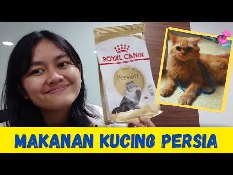 ROYAL CANIN PERSIAN ADULT MAKANAN KUCING PERSIA   MY CATS DIARY