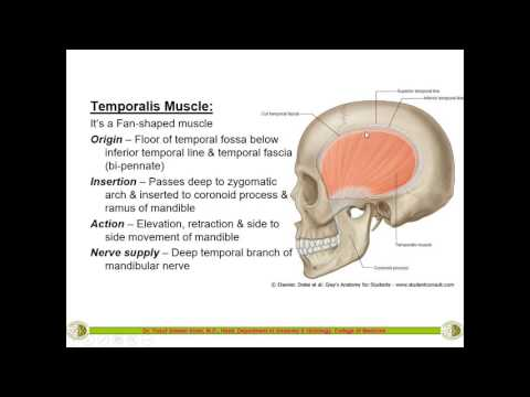Temporal, Infra-Temporal Fossa & Muscles of Mastication ......... by Dr. Yusuf