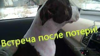 Была найдена после потери,  встреча собаки с хозяином!!!