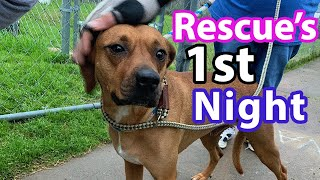 How to PREP for a RESCUE DOG | What to Expect (FIRST NIGHT)
