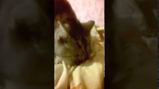 кот проказник пристает