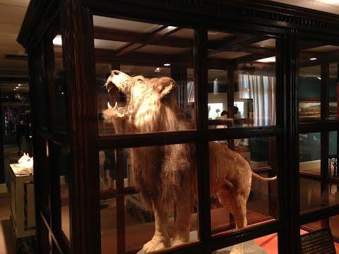 Mummies, Shrunken Heads And Winston Churchill's Lion - The Lightner Museum