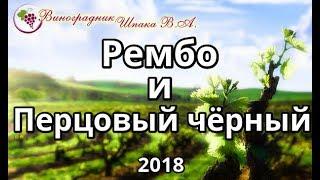 Рембо и Перцовый чёрный урожая 2018 года