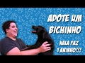 Rapidinhas do Rê | Adote um cachorro | Aniversário da Nala