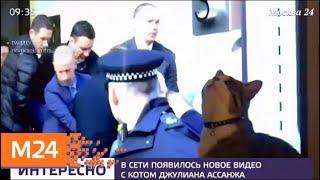 Смотреть видео В Сети появилось новое видео с котом Джулиана Ассанжа - Москва 24 онлайн