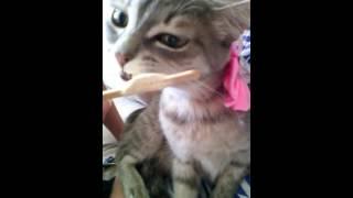 Приколы с кошко. Кошка ест мороженого. Кис-кис мяяуу