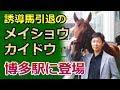 2017年7月27日 今期誘導場引退のメイショウカイドウ、博多駅に登場!