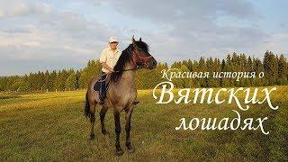 Вятские лошади. Красивая история одного героического Человека!