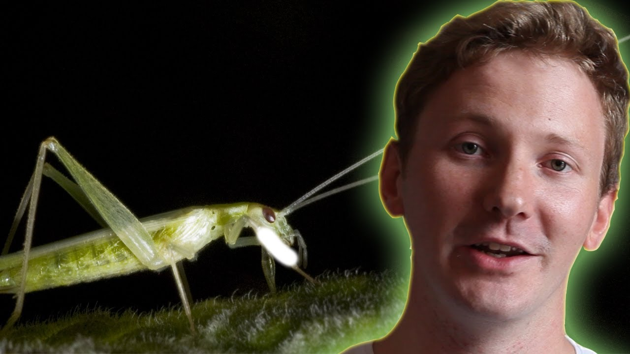 Laser tracking crickets - Earth Juice (Ep 32) - Earth Unplugged