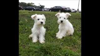 Puppies Bingo And June