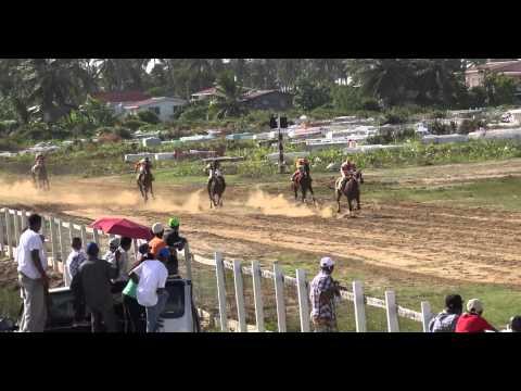 GUYANA-BUSH LOT UNITED TURF CLUB 2014-West Coast Berbice
