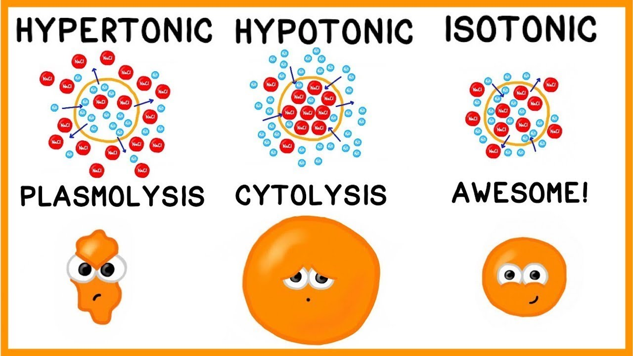Hypertonic Hypotonic And Isotonic Solutions Youtube
