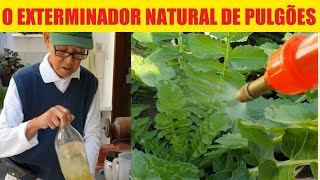 Inseticida Natural Para Pulgão e Insetos