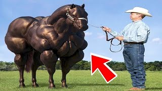 10 Animal Hybrids You Wont Believe Actually Exist