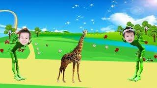 учить животных для малышей - животные для детей - видео развивающее #47