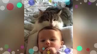 Коты и дети, лучшие друзья! Cats and babies the best video!