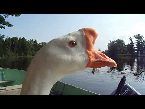 """Chores On The Dock Become A """"Rescue"""", With Pet Goose George™ !!!"""