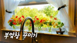 브런치, 꽃재활용, 제라늄수경재배, 미국주부브이로그