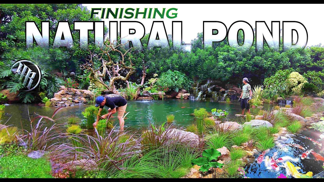 Garden Koi Pond Renovation
