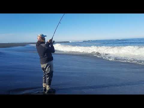 Video Express  Pesca de Corvinon . Chile